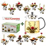 tealyra - 12 pcs blooming tea and 800ml glass teapot set - 12 variety flavors of finest flowering