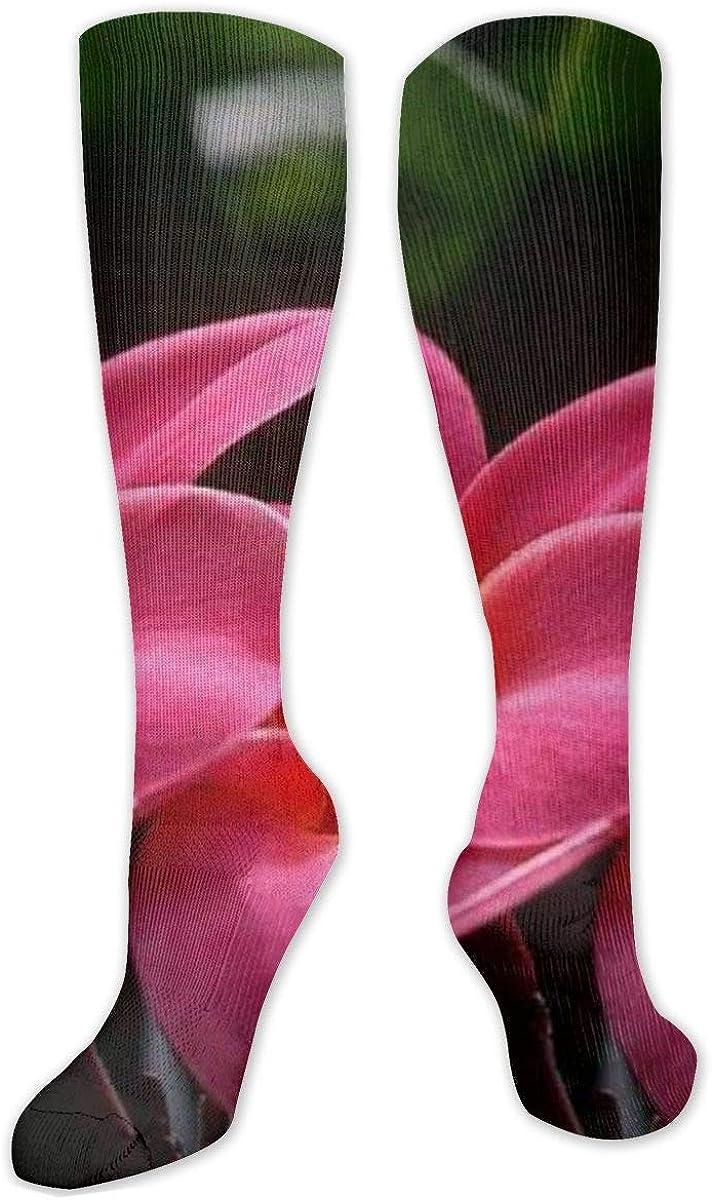 Frangipani Knee High Socks Leg Warmer Dresses Long Boot Stockings For Womens Cosplay Daily Wear