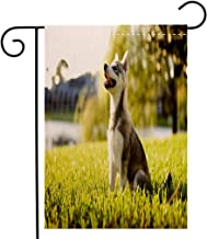 Creative Home Garden Flag Alaskan Malamute Klee Kai Puppy Sitting on Grass Looking Up Friendly Young Cute Animal Decorative Multicolor Garden Flag Waterproof for Party Holiday Home Garden Decor