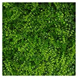 Artificial Hedge - Outdoor Artificial Plant - Great Fern and Ivy Substitute - Sound Diffuser Privacy Fence Hedge - Topiary Greenery Panels (12, Juniper)