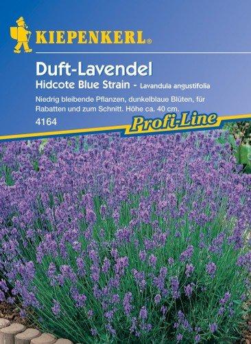 Lavendel Hidcote Blue Strain