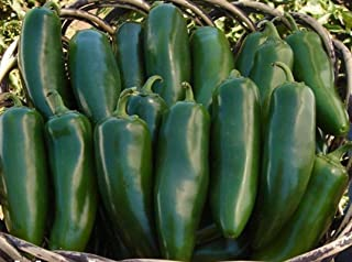 Mammoth F1 Hybrid Jalapeno Hot Pepper Seeds (40 Seed Pack)