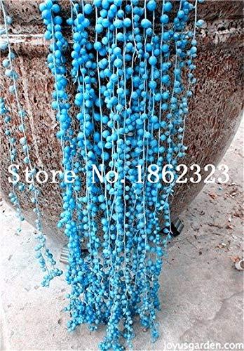 GEOPONICS SEMI: 100pcs perla Chlorophytum Bonsai rara bellezza Piante grasse Bonsai facile da coltivare bonsai da interno Seed Casa & amp; Giardino Delle Piante: 9