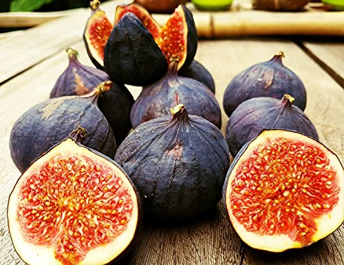 RWS 100 semillas negro fig türkische Bursa, semillas bursa higo negro, Ficus carica, muy süss