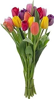 Stargazer Barn - Happy Bouquet - 15 Stems of Fresh Tulips in Rainbow Assortment - No Vase