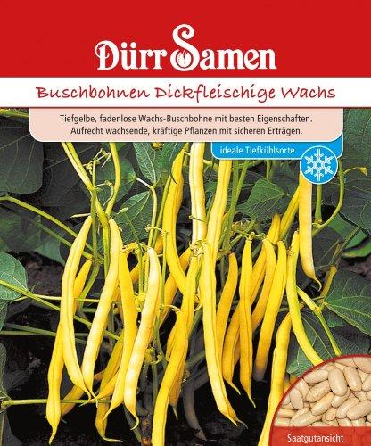 Dürr Samen 0312 Buschbohne Dickfleischige Wachs (Buschbohnensamen)