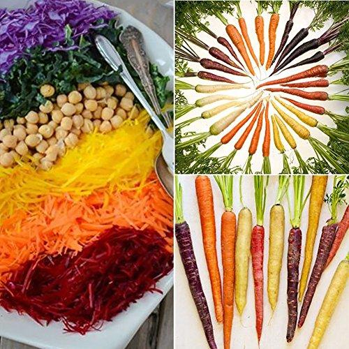Zhouba Karotten-Samen für Hof, Gartenpflanze, 200 Stück, Regenbogen-Möhrensamen, guter Geschmack, einfach zu züchten, Gemüse, Zuhause, Bauernhof, Garten