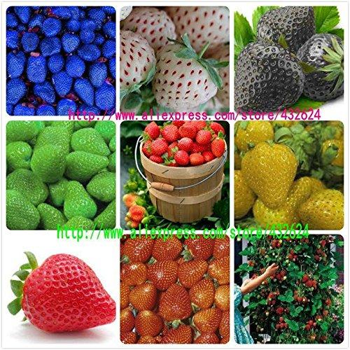 9kinds de graines de fraise, blanc, jaune, bleu, noir, rouge, vert, grandes fraises, la montée, le total plants.bonsai Fruit de jardin 900 semences