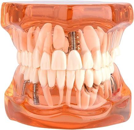 Amazon.es: odontologia