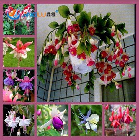 100 Pcs/Sac fuchsias Graines, fleurs, pot Diy Fleurs Plantation, Bell fleurs, lanterne Begonia, couleurs mélangées