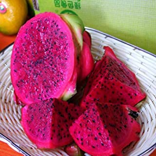 Best can you plant dragon fruit seeds Reviews