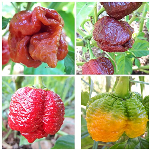 PEPERONCINO TRINIDAD MORUGA SCORPION RED YELLOW CHOCOLATE E CARAMEL 40 SEMI