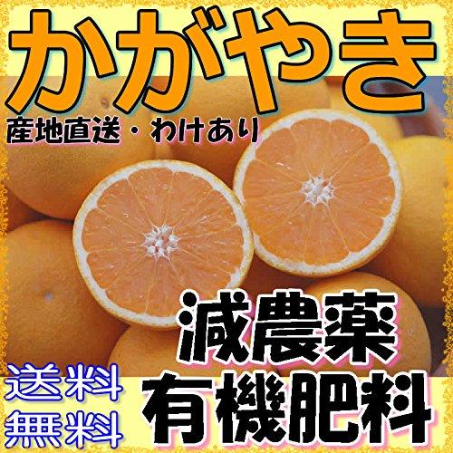 【訳あり】愛媛産 減農薬 かがやき 小玉サイズ 約3kg ore