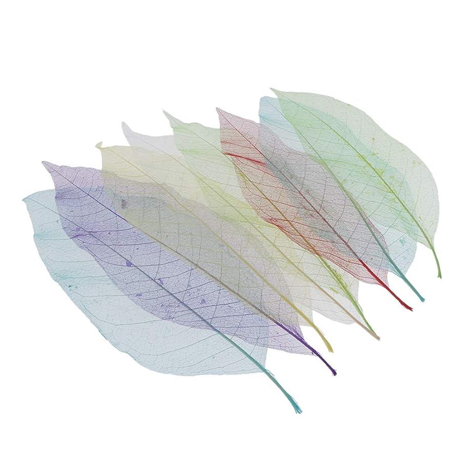 人質迷惑誠実P Prettyia ドライフラワー 花材 押し花 素材 ドライ葉 押し葉 スケルトン葉 乾燥葉 乾燥花 自然の葉 8個入り