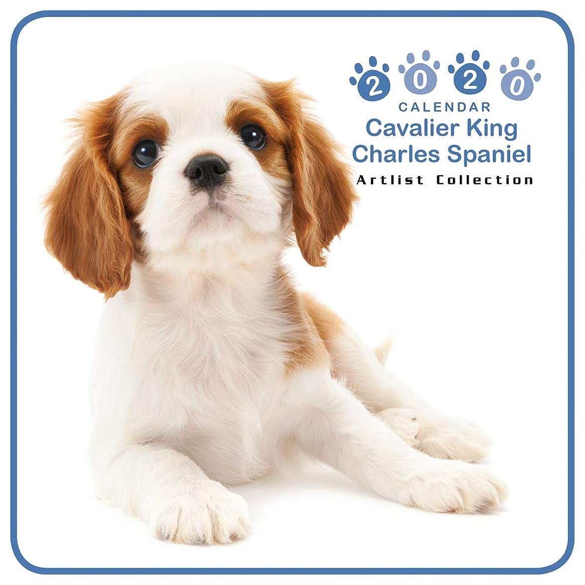 ポルトガル語あいまいなええカレンダー 2020 ミニサイズ 壁掛け キャバリア?キング?チャールズ?スパニエル (ミニ) 403347 ノーマルレンズシリーズ 2019年9月-2020年12月 アーリスト イヌ いぬ Cavalier King Charles Spaniel