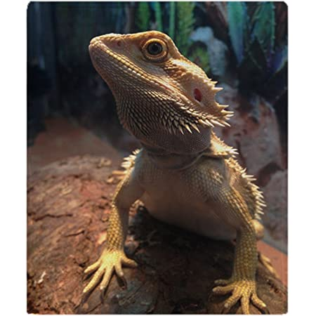 Blankets for Bearded Dragons Or Other Small Animals B5