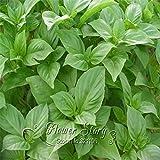 100graines/paquet de graines de tomate de Relique grecque plantes de jardinage semis de beaux Graines non OGM pour le jardin potager