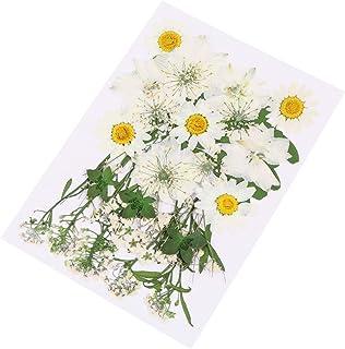 HEALLILY 36 Pcs Mixte Fleur Séchée Réel Pressé Fleur Plantes Spécimen Gaufrage Art Artisanat Fleur Séchée Pour La Maison B...