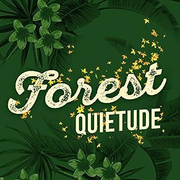 Forest Quietude