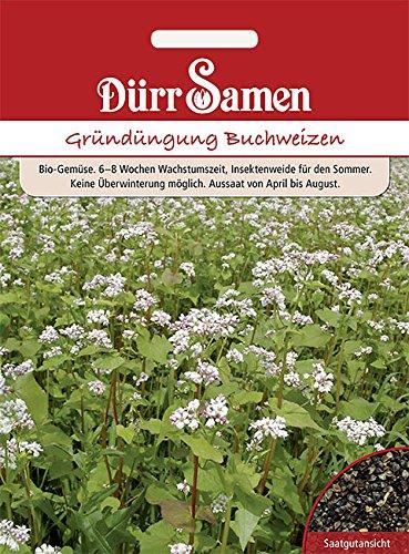 Dürr Samen - Gründüngung Buchweizen, 50g