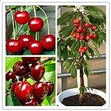 EgBert 20 Unids/Bag Cherry Seeds hogar de Frutas de Interior Bonsái de Cerezo Enano plantación de Semillas