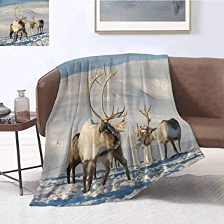 Luoiaax Winter Rugged or Durable Camping Blanket Reindeers in Natural Environment Tromso Northern Norway Caribou Antler Wildlife Warm and Washable W80 x L60 Inch