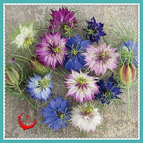 1bag / 400pcs Attractive Amour impressionnant dans un Mist Graines de haute qualité jardin des plantes de bricolage