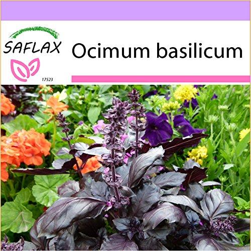 SAFLAX - Basilic rouge - 200 graines - Ocimum basilicum