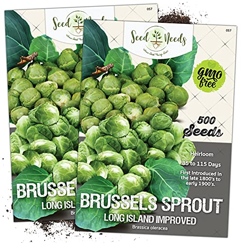 Seed Needs, Brussels Sprout Long Island Improved (Brassica oleracea) Twin Pack...