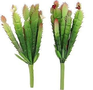 Best flower looking cactus Reviews
