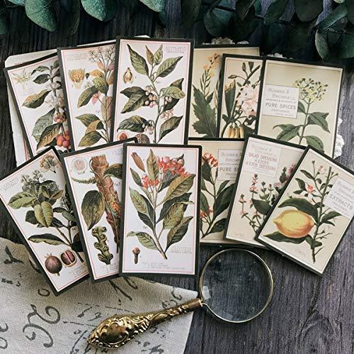 PMSMT Satz Klebewürfel für Sammelalbum, Satz mit 12 Vintage-Pflanzenpapier, Beleuchtung in englischer Sprache, selbst Machen