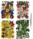 Roqueen 127 Piezas Naturales Flores Prensadas Secas para Resina con Pinzas para Scrapbooking DIY Vela Decoración Joyas Artesanía Tarjetas Haciendo(4 Paquetes)