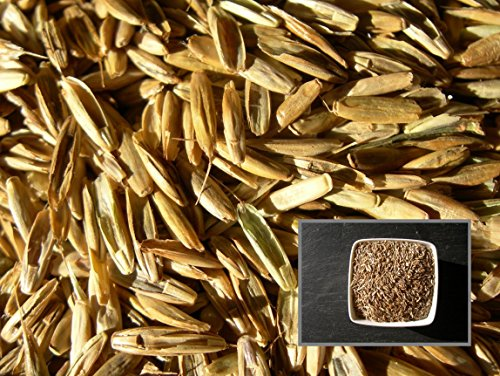 Ray Grass Italien Sultano - 6 sachets de 3 grammes - Lolium Multiflorum - Italian Ryegrass - (Engrais Vert - Green Manure) - SEM02