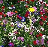 MURIEO jardín- Mezcla de flores perennes 'Mixtas' de mariposas y abejas de flores silvestres - Flower Meadow, Rare Wildflower Seeds Hardy Flores silvestres y mezcla de hierbas
