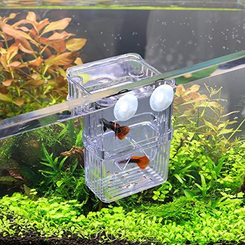 WEAVERBIRD Aquarium Fisch Isolation Box Acryl Transparent Hatchery Inkubator mit 2 Saugnapf für Aquarium Tank Züchter