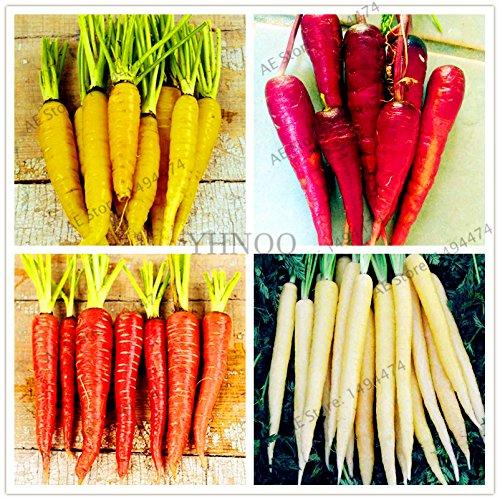 100pcs/sac graines de carotte, graines de légumes de fruits sucrés, plusieurs espèces à choisir, pour la plantation de jardin à domicile