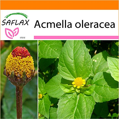 SAFLAX - Garden in the Bag - Kräuter - Parakresse - 500 Samen - Mit Anzuchtsubstrat im praktischen, selbst aufstellenden Beutel - Acmella oleracea