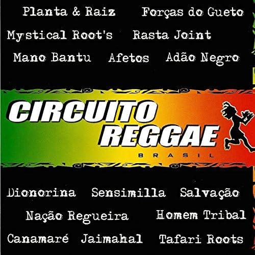 Circuito Reggae