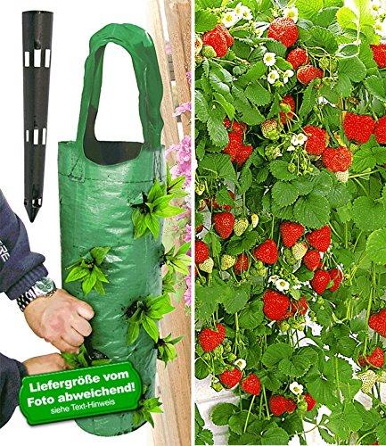 BALDUR-Garten Hänge-Erdbeere® 'Hummi®' 3 Pflanzen & Pflanzbeutel 'Kaskade'& Gießtrichter,1 Set
