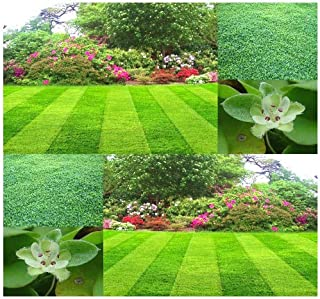 1 LB (233,000+ Seeds) Dichondra Lawn Grass Seed - Fun Sun Or Part Shade - Grows Easily - Low Maintenance - Zones 6 and UP