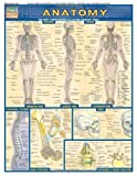 Anatomy (Quickstudy Reference Guides - Academic)