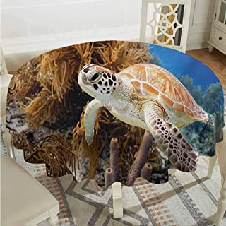 ScottDecor Dining Round Tablecloth Turtle Coral Reef and Sea Turtle Close Up Photo Bonaire Island Waters Maritime Pale Coffee Brown Blue Fabric Tablecloth Diameter 54