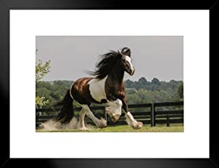 Poster Foundry Gypsy Vanner Horse Running in Field Photo Matted Framed Art Print Wall Decor 20x26 inch
