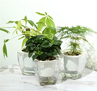 Self Watering Planter , FENGZHITAO African Violet Pots, Clear Plastic Automatic-Watering Planter Flower Pot Square Plant P...