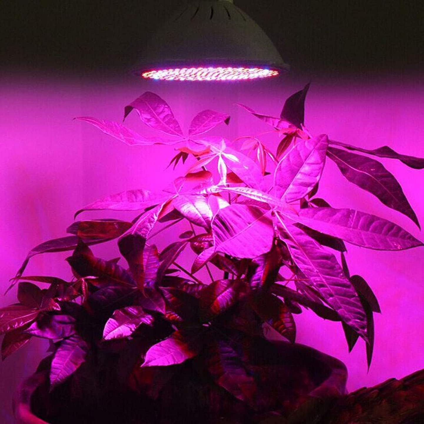 Iulove E27 200 Led Grow Light Hydroponic Lighting with Clip Plants Lamps for Flower