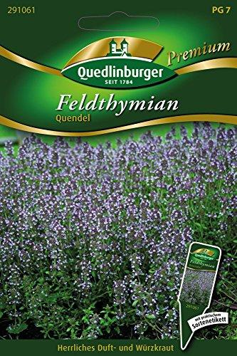 Feldthymian, Quendel