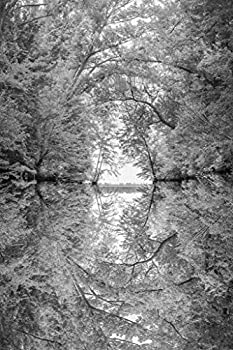 Reflection of Tree Branches in River Black White Photo Photograph Cool Wall Decor Art Print Poster 24x36