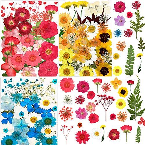 Siebwin Flores Secas Naturales, Flores Prensadas Secas 101 Pcs Flores Secas para Resina álbumes de Recortes, Velas de Bricolaje, uñas, Colgante Artesanías Fabricación (1 Pinzas)