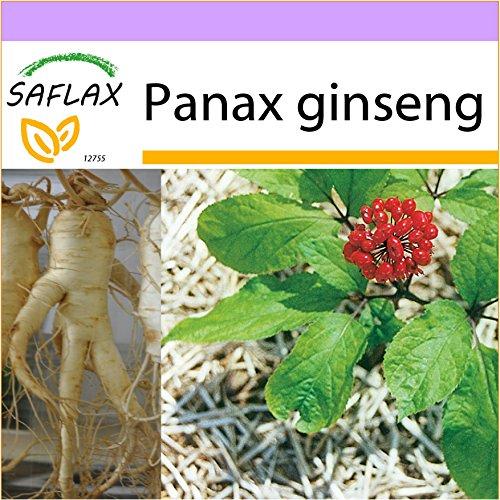 SAFLAX - Ginseng - 10 semillas - Panax ginseng