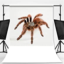 Antilles pinktoe Tarantula Against White Background Photography Backdrop,Studio Shot for Video Photography,Pictorial Cloth:6x10ft